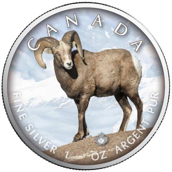 5 Dollar Kanada Trails of Wildlife - Dickhornschaf 2021 Silber St